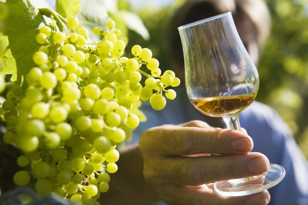 Vignoble de Cognac - Charentes