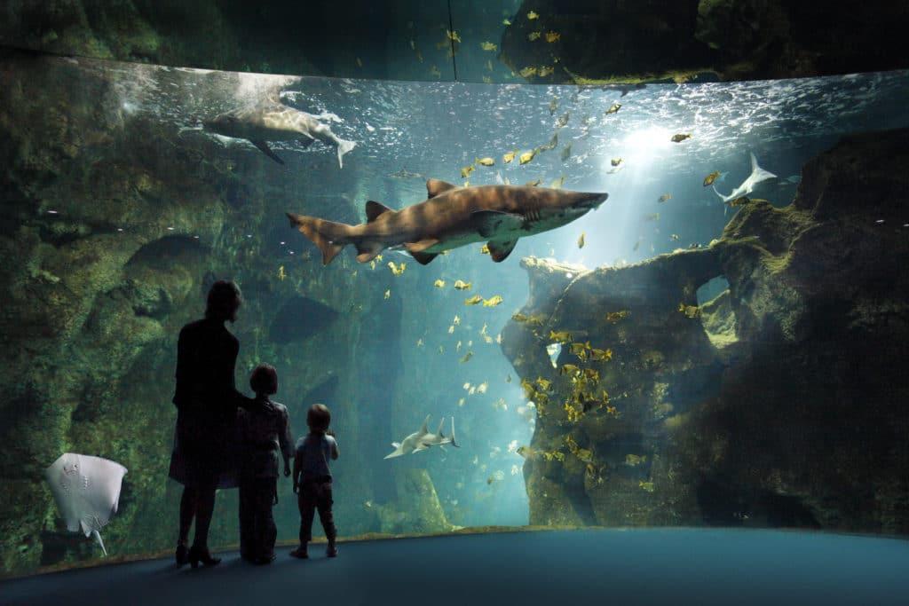 Requins a l'aquarium de la rochelle
