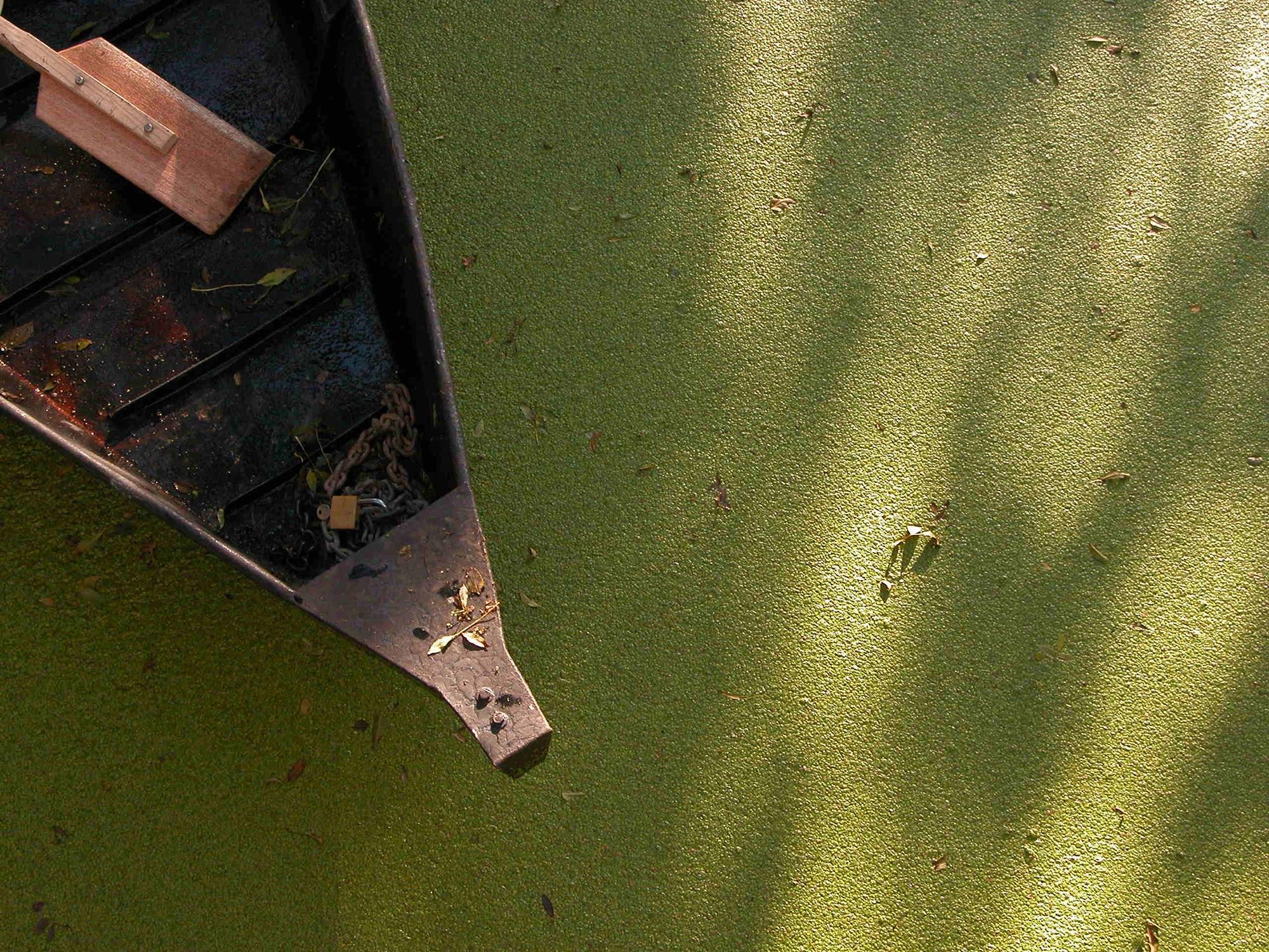 Barque Marais Poitevin Lentilles