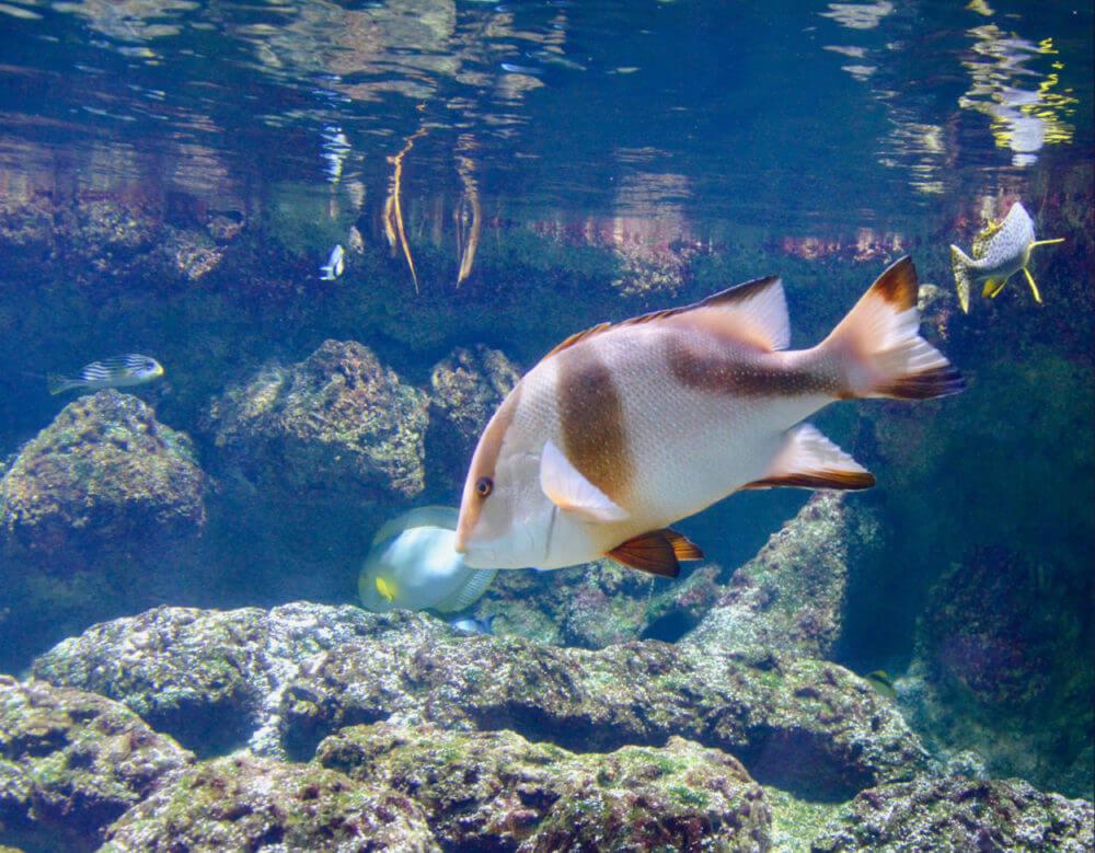Poissons Aquarium