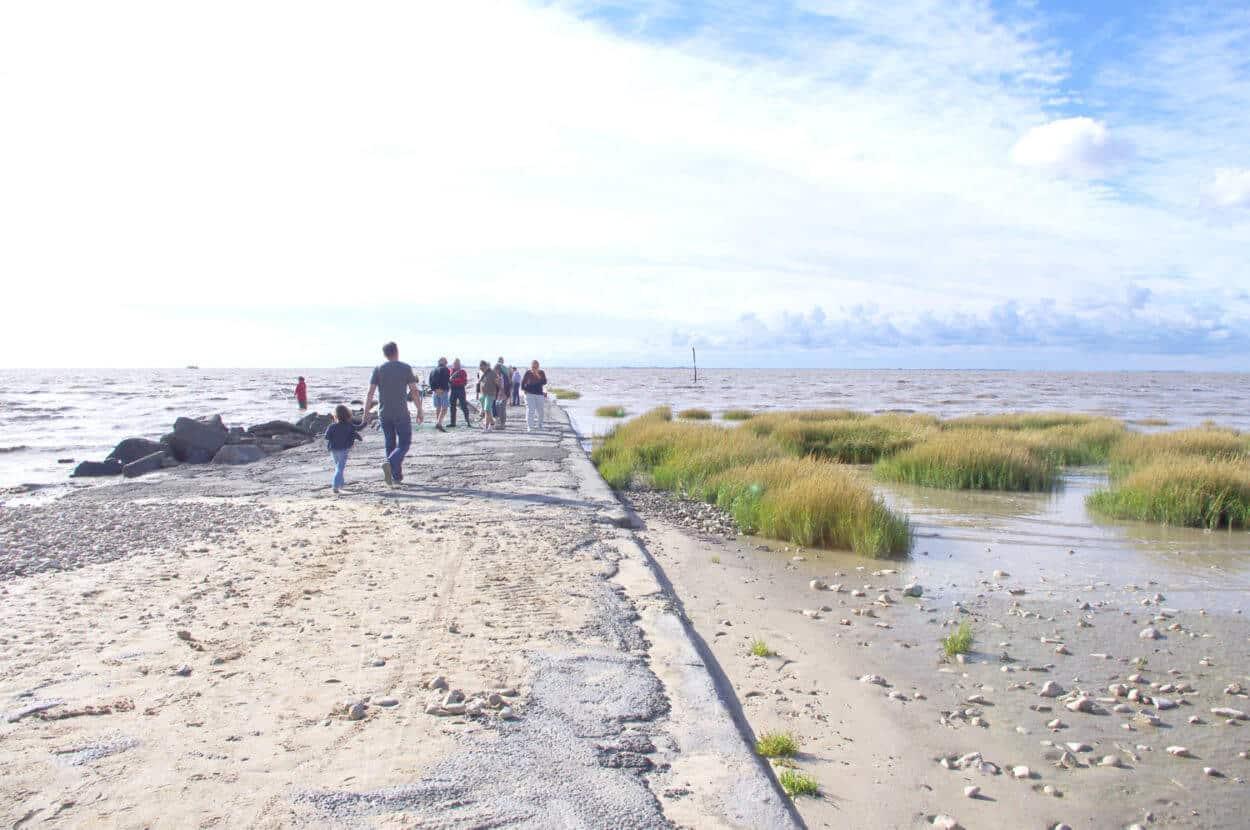 Promenade a Esnandes dans la baie d aiguillon oiseaux