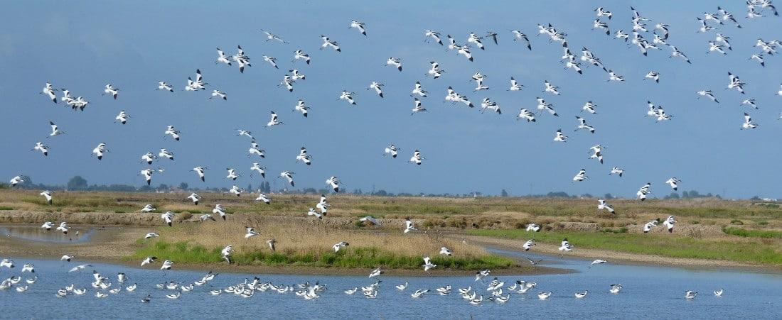 Envolée d'oiseau à la réserve naturelle de Moëze-Oléron Pôle-Nature