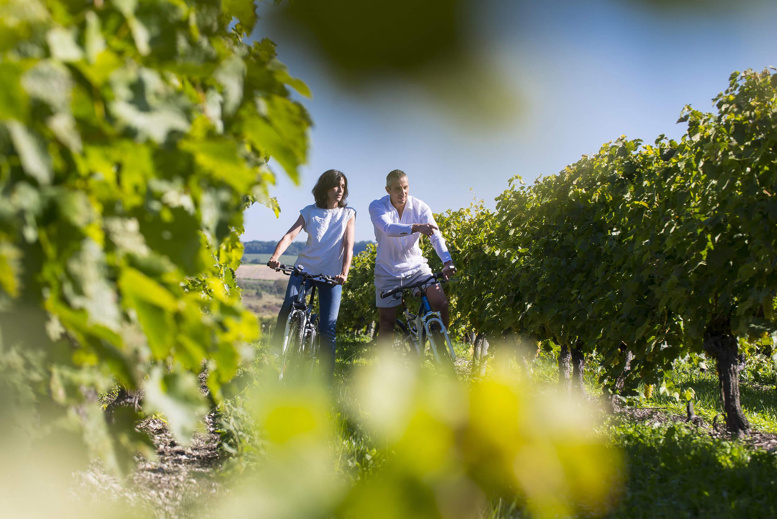 Balade à vélo dans le Vignoble Cognaçais