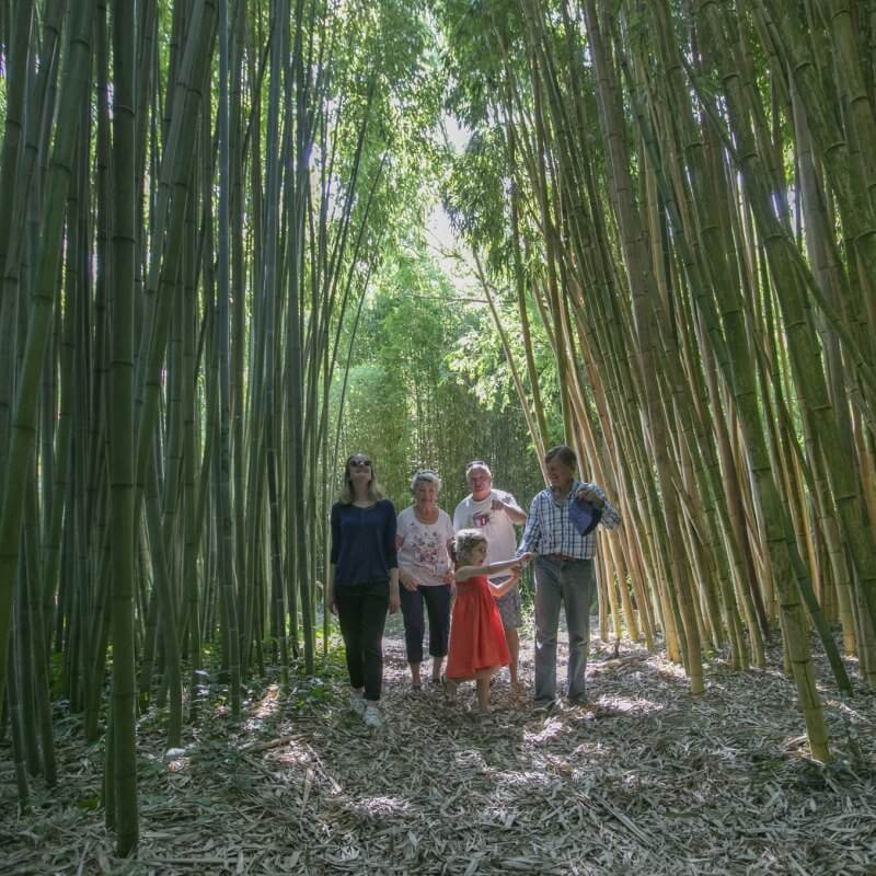 visite de la bambouseraie de Matha