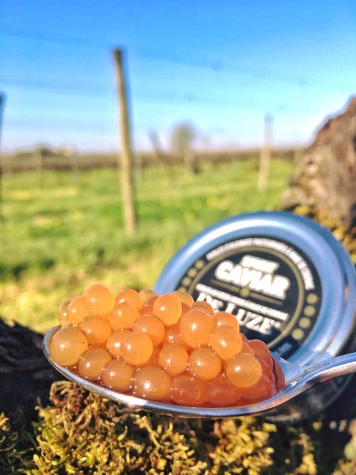 Caviar de Luze