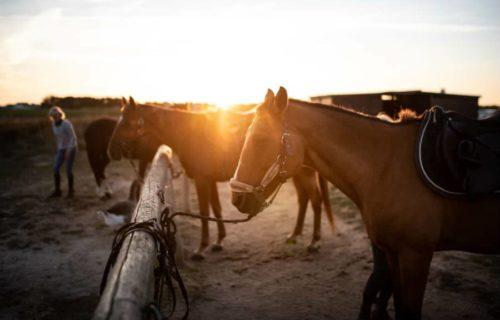 Promenade à cheval sur l'île de Ré
