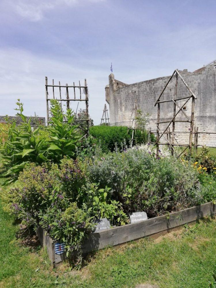 jardin des simples château de Saint Jean d'Angle