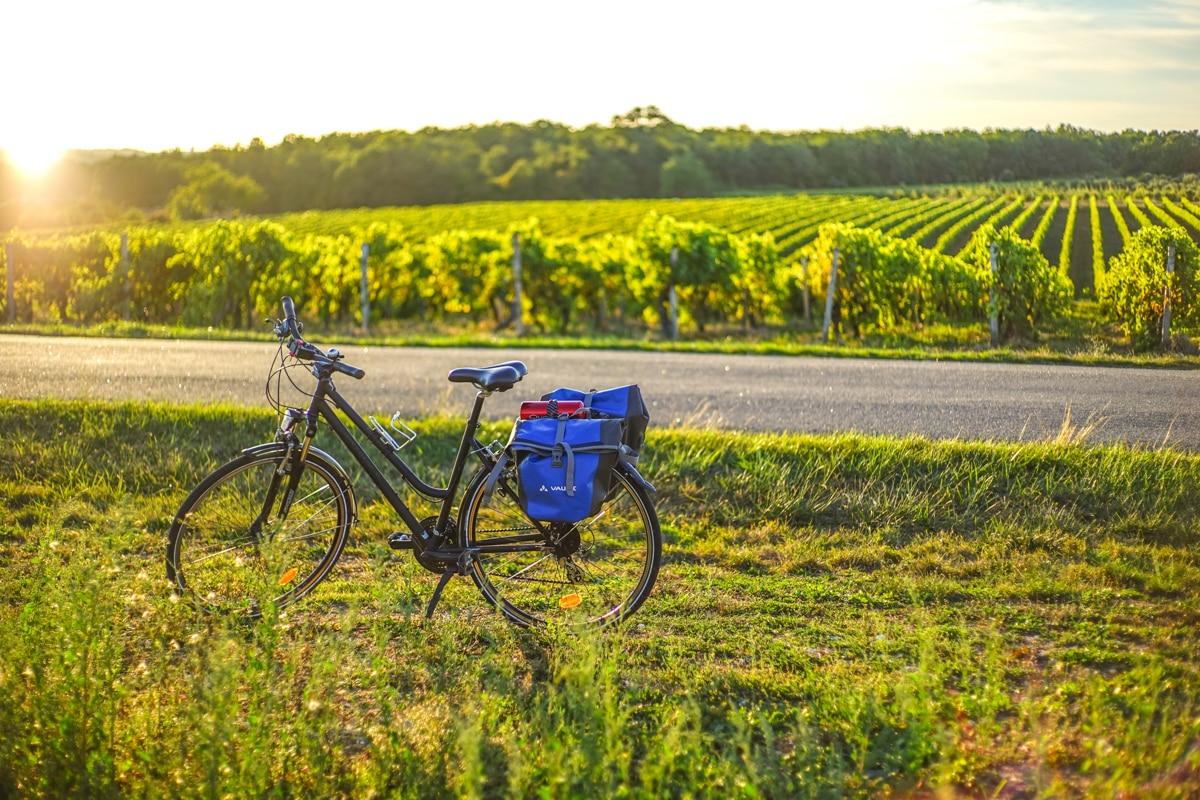 les vignobles de Charentes à vélo