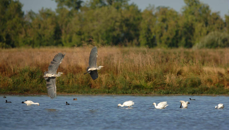 réserve naturelle ornithologique Lilleau des Niges