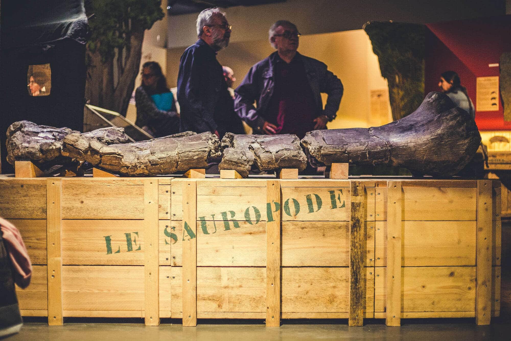 Expo Dinosaures, les géants du vignoble au Muséum d'Histoire naturelle de La Rochelle