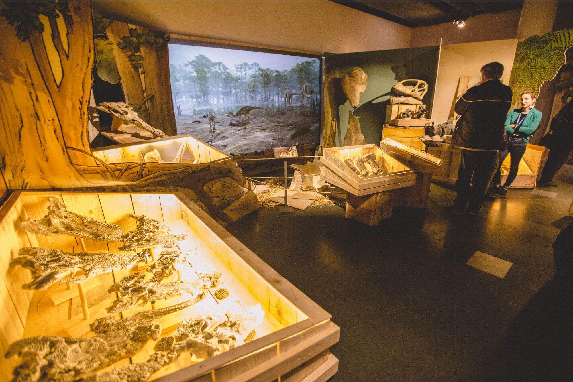 Salle d'exposition sur les dinosaures Muséum d'Histoire naturelle de La Rochelle
