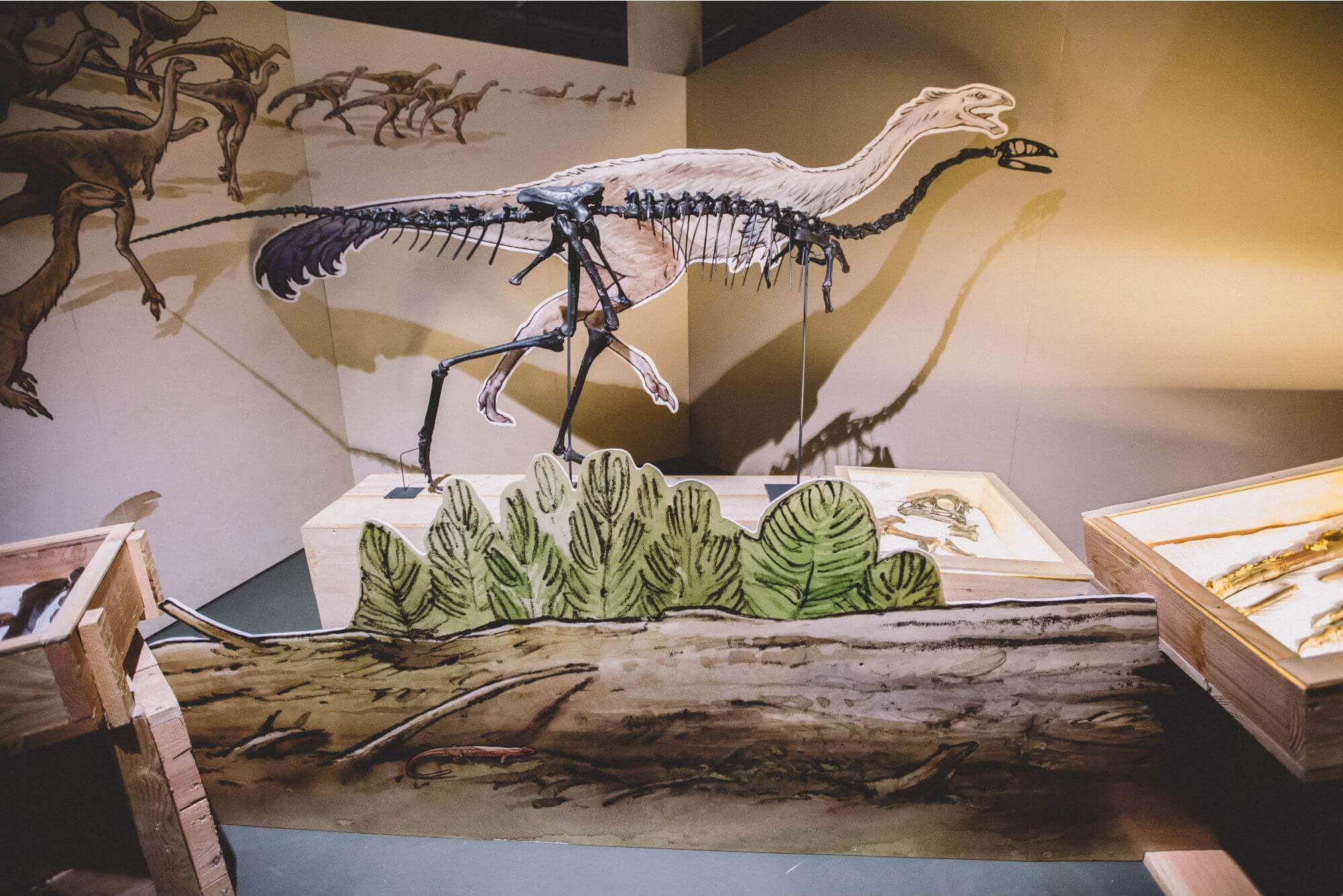 Exposition sur les dinosaures Muséum d'Histoire naturelle de La Rochelle