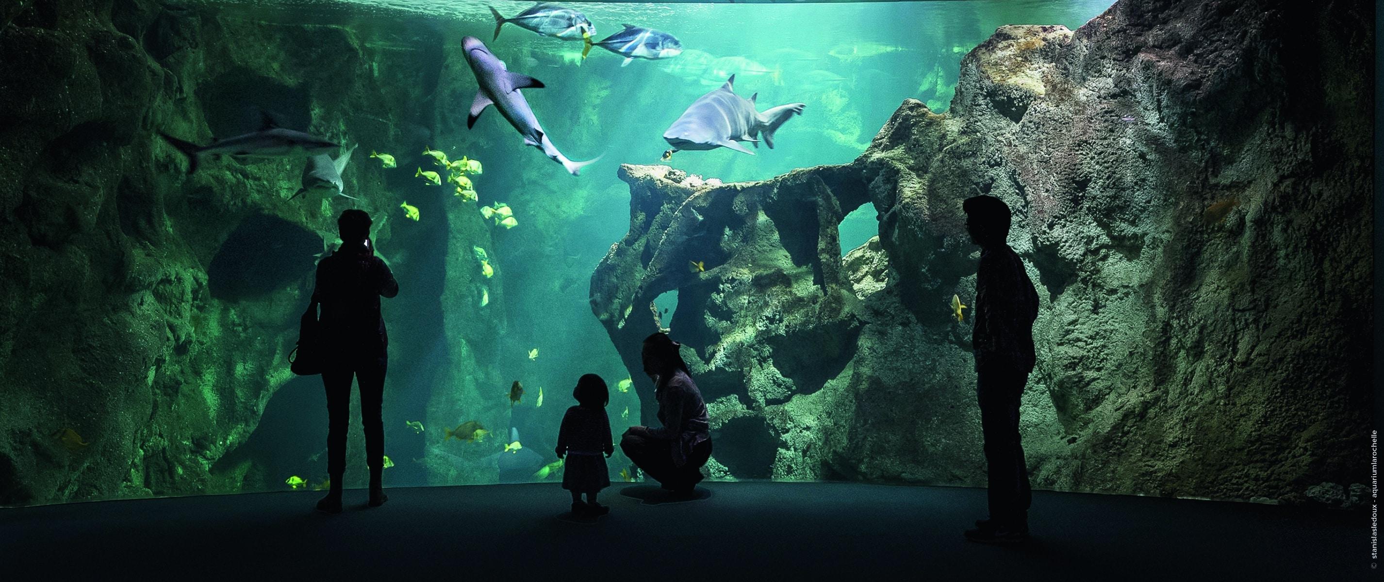 l'aquarium de La Rochelle @stanislasledoux