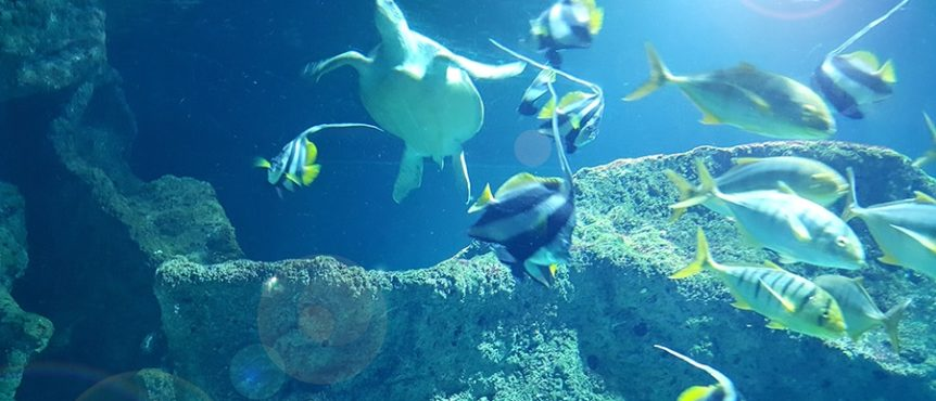 Tortue et poissons, aquarium de La Rochelle, Charente-Maritime