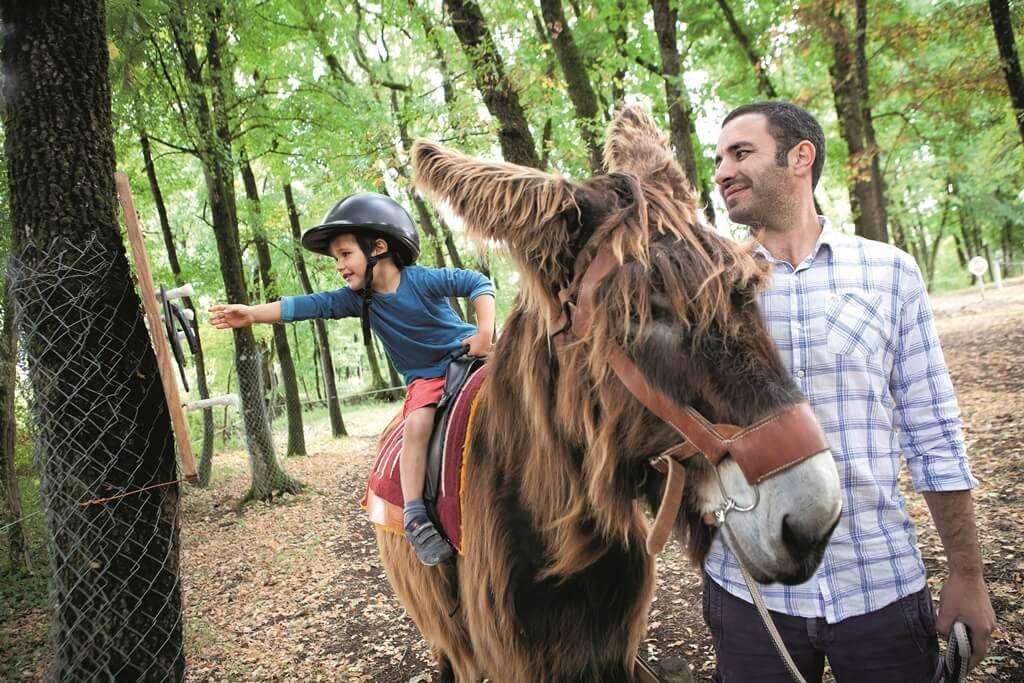Balade en âne en Charentes