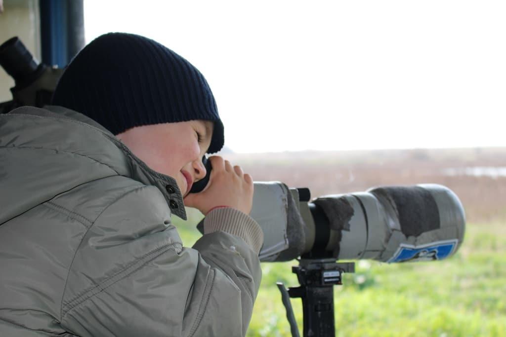 observatoire oiseaux
