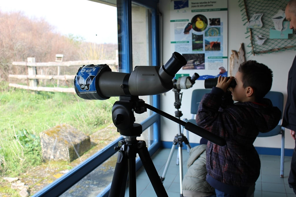observation oiseaux
