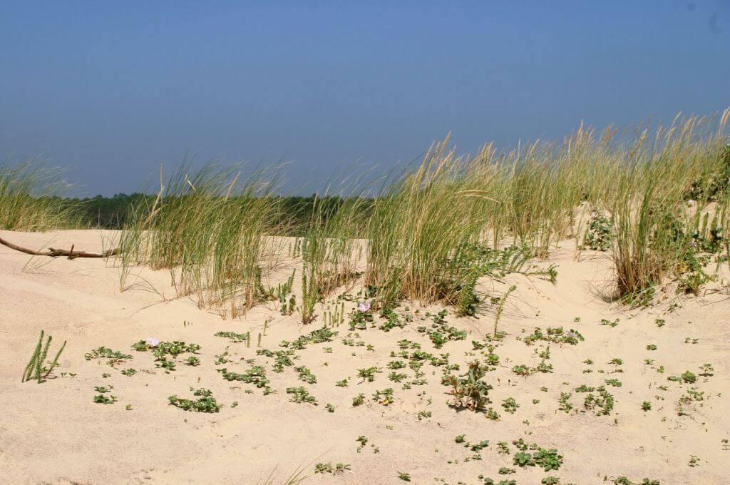 dunes végétation protégée