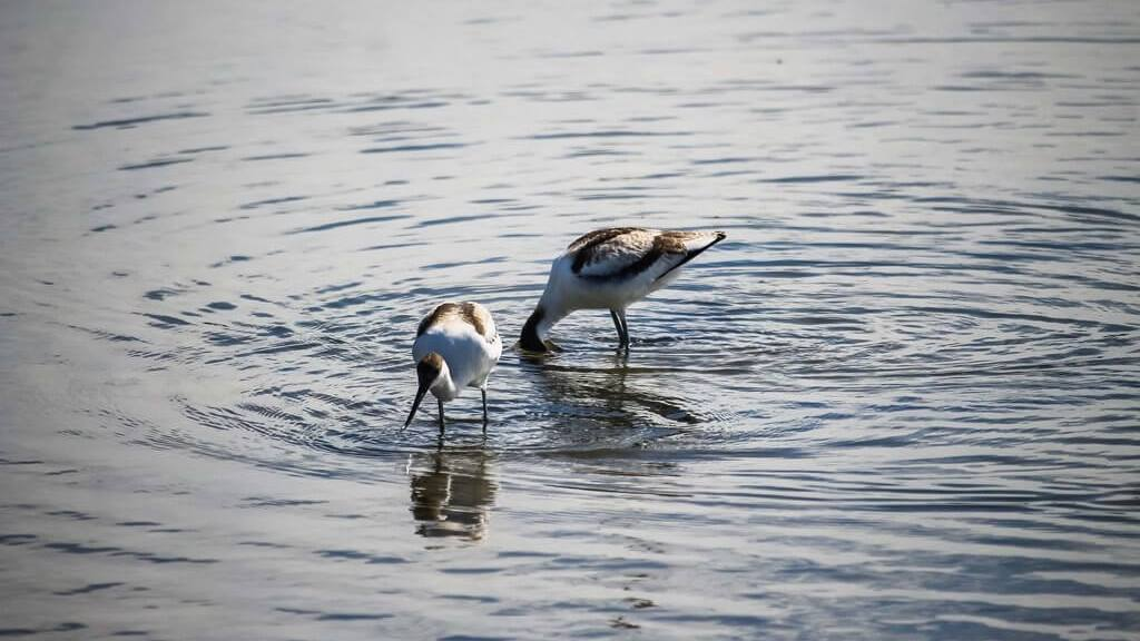 oiseaux nature